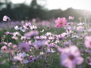 Planta y flores