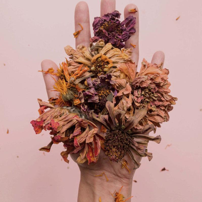 Exposición Floral mano